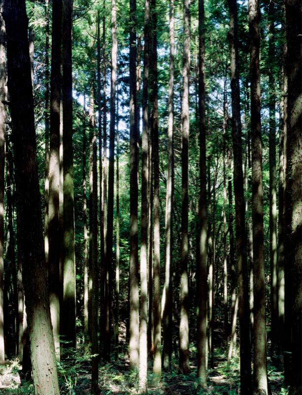 城戸 保|森と畑